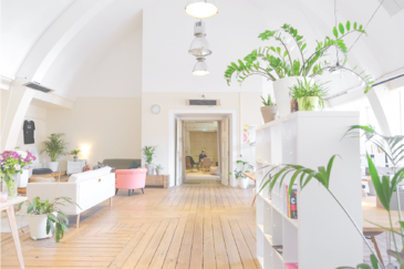 bright office good indoor air quality with plants